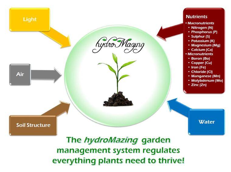 plant-needs-chart