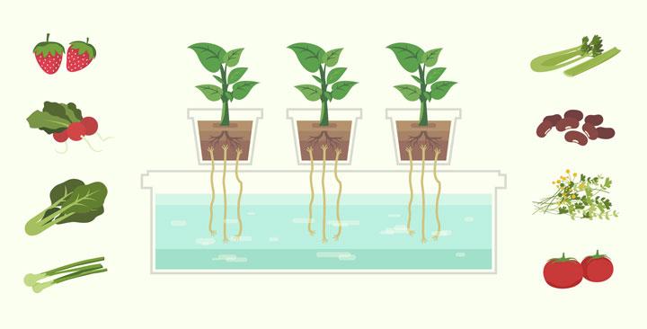 hydroponics-header